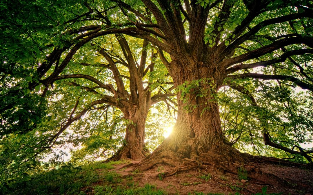 Save environment and save tree
