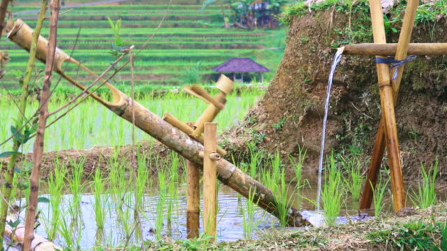 Bamboo-drip-irrigation-system