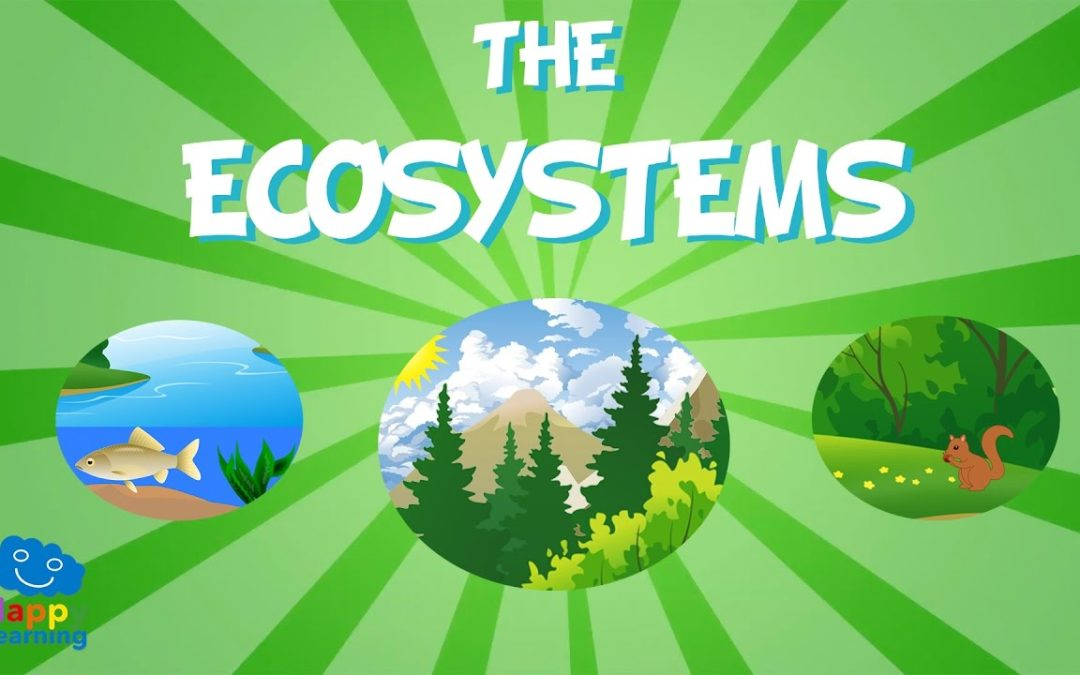 10 eco system project ideas 2019